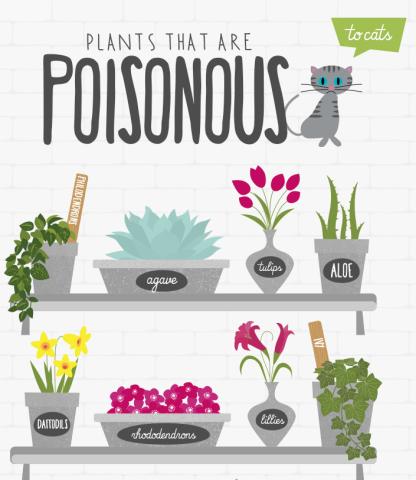 poisonous plants 10 outdoor plants poisonous to cats. Black Bedroom Furniture Sets. Home Design Ideas