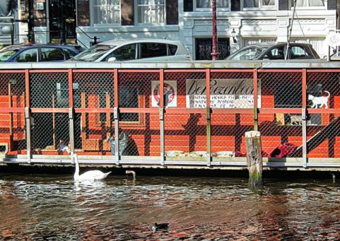 A Swan Checks Out the Cats on De Poezenboot (Photo by Microtoerisme/Creative Commons via Wikimedia)
