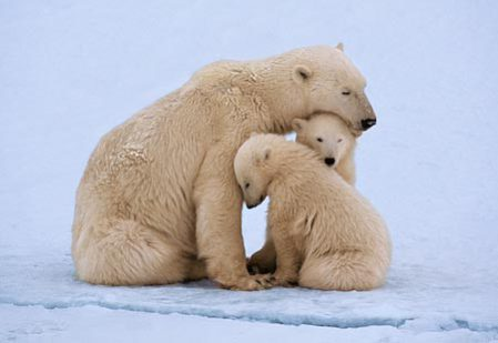 Mama polar bear with cubs: image via detlaphiltdic.blogspot.com
