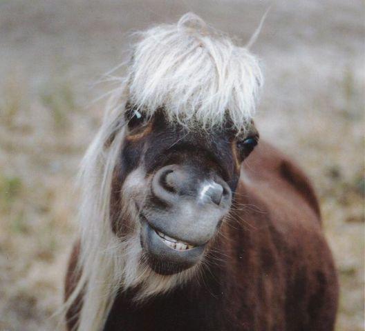 Ginning Pony (Image via Tumblr)