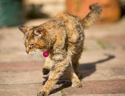 Poppy, the World's Oldest Cat (You Tube Image)