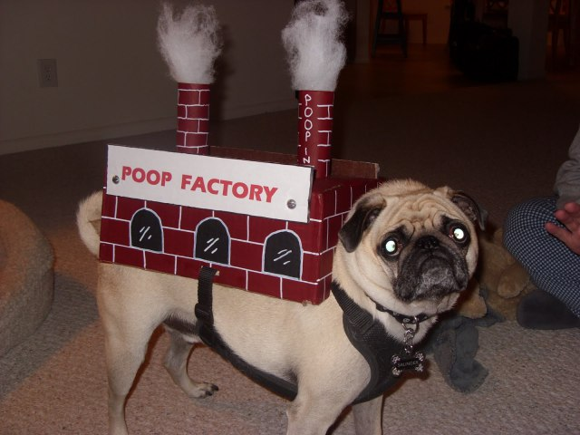 Drop Shipment: The Top 10 Canine Poop Factory Costumes ...