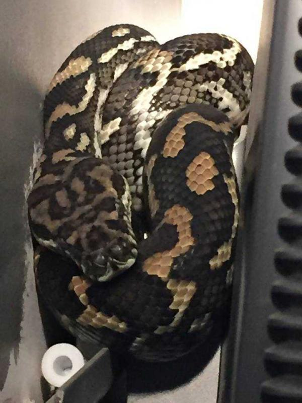 Python On TV Gets Low Ratings From Homeowners