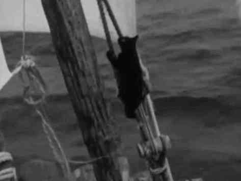 Puce climbing the rigging (You Tube Image)