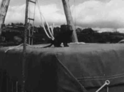 Puce sitting on top of the raft's cabin (You Tube Image)