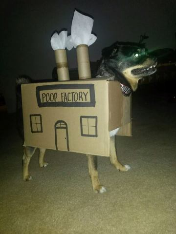 Dog in Halloween Costume (Image via Ranker)