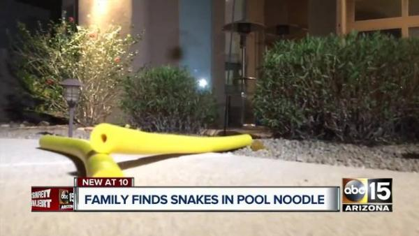 Warning: Pool Noodles May Contain Rattlesnakes