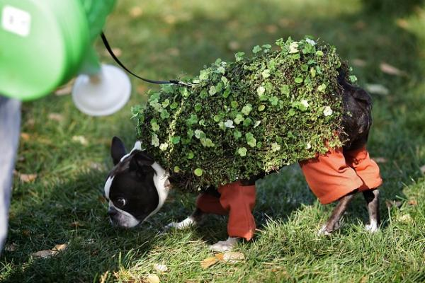 The Top 10 Real Chia Pet Pets