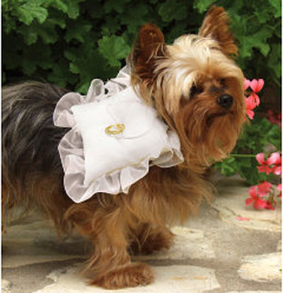 The Well Dressed Dog At A Wedding Bridesmaids Ring Bearing Dogs