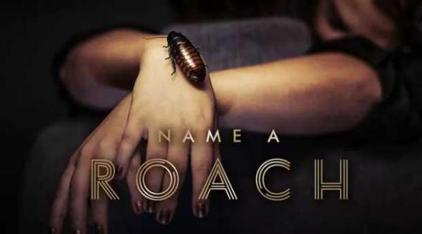 Bronx Zoo Brings Back Name-a-Roach Program For Valentine's Day