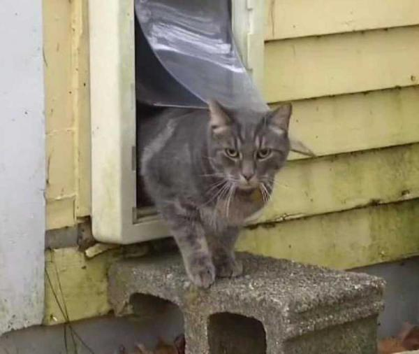 Cat Missing For A Year Found 120 Miles Away