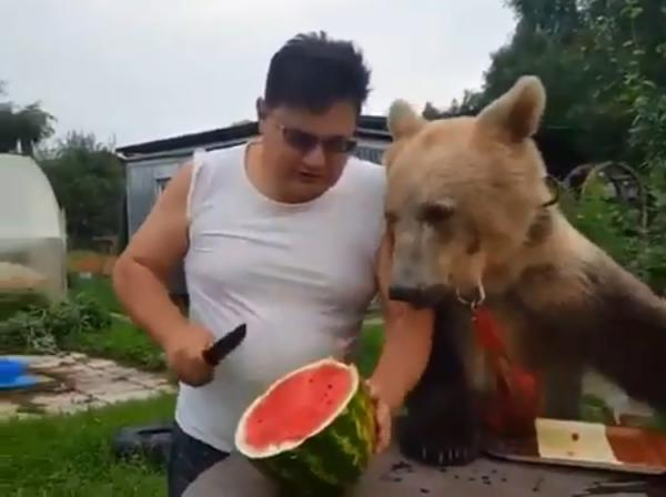 Russian Man Shares Watermelon With Pet Bear