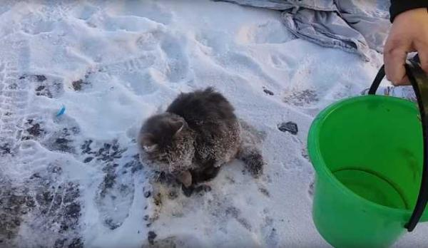 Russian Cat Frozen In Puddle Saved By Warm-Hearted Couple