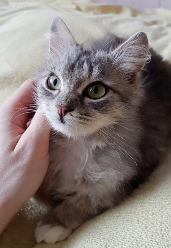 Frozen Russian Rescue Kitten Finds Warm Forever Home
