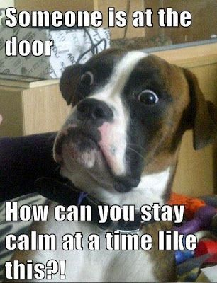 Dogs and doorbells