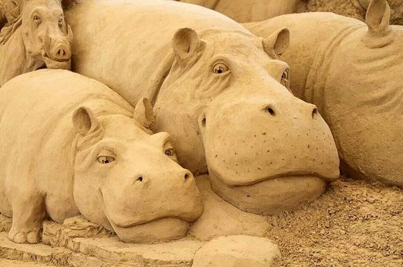 Hippos in the Sand