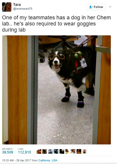 science dog goes viral, viral dog tweets
