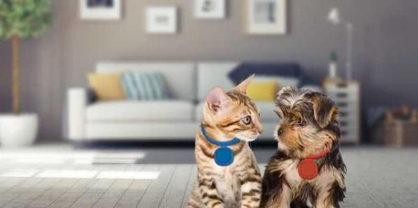 Scollar Smart Collars for dogs and cats