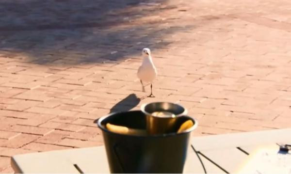 Cafe Arms Diners With Water Pistols To Deter Pesky Seagulls