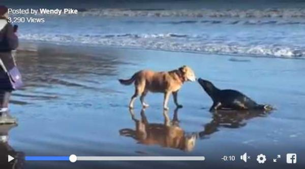 Beachcombing Pup And Curious Seal Share A Kiss