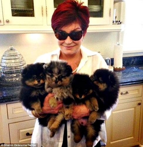 Ozzy and Sharon Osbourne open doggy daycare