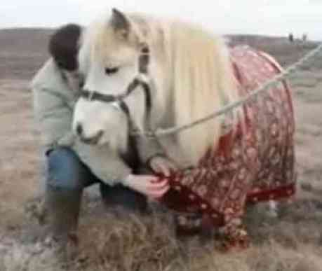 Shetland Pony Modeling The Latest In Fair Isle Knit (You Tube Image)