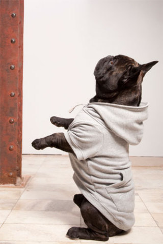 Dog hoodie by Trendy4Paws: ©Trendy4Paws