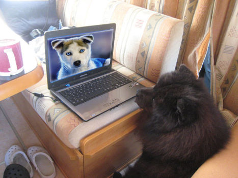 Dog Surfing the Internet (Photo by Udo Grimberg/Creative Commons via Wikimedia)