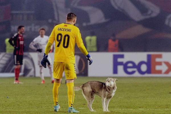 Playful Pooch Invades Soccer Pitch, Pals Up With Goalie