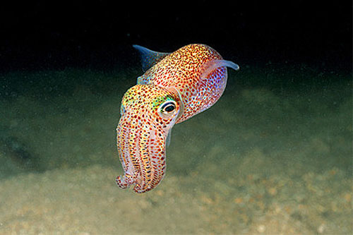 http://petslady.com/sites/default/files/inline-images/squid.JPG