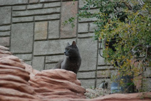 Disneyland's Feral cats: Source: Scrappycupcake.blogspot.com