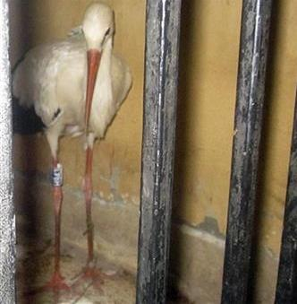 Bird Detained In Egypt For Being A Spy (You Tube Image)