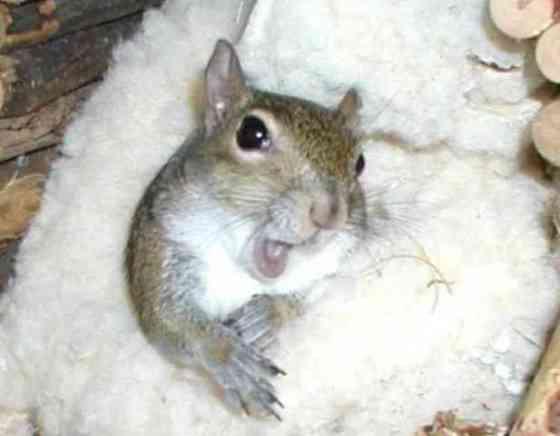 Sugar Bush Squirrel (You Tube Image)