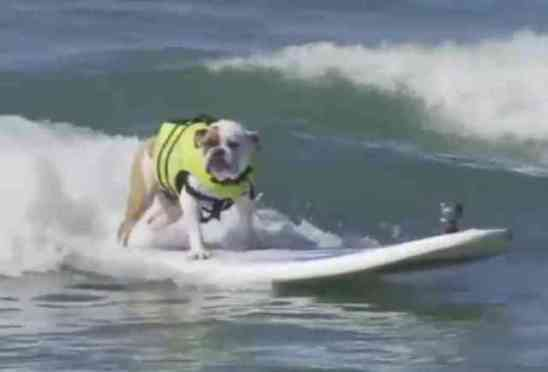 Dog Surfing in the Surf City Surf Dog Competition (You Tube Image)