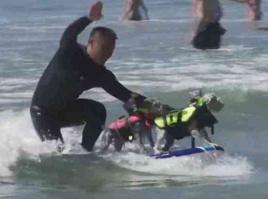 Dude and his Dogs Surfing in the Surf City Surf Dog Competition (You Tube Image)