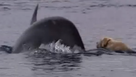 Ben and Duggie Swimming Together (You Tube Image)