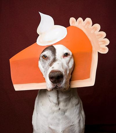 All Pie Myself (Photo via Pinterest)