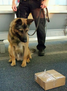 Dog trained to sniff for contraband: image via dogblog.dogster.com