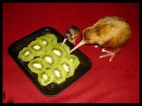 Kiwi vs. Kiwi (Image via The Poke)