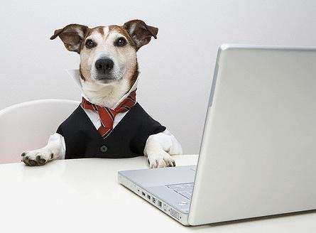 Dog at the Office (Image via Tails)