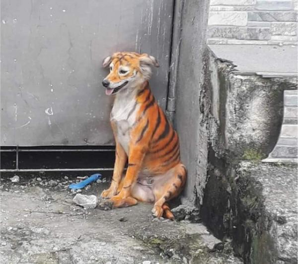 Tiger Striped Spray Painted Stray Dog Spotted