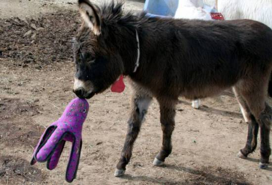 Are there toys especially for donkeys?: image via donkeyrescue.donordrive.com
