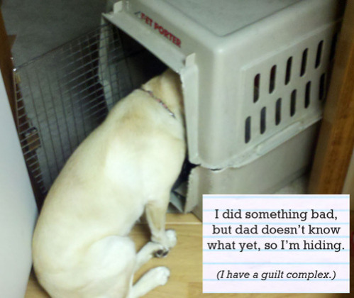 "Shamed Dog, 'Don't ask and I won't tell."": image via dog-shaming.com"