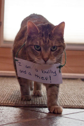 Cat Shaming: 'Just being me!': image via catshaming.tumblr.com