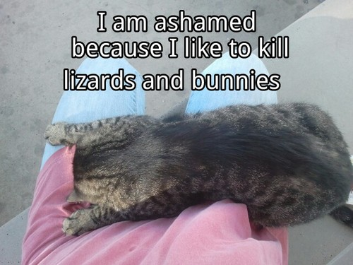 Cat Shaming, 'Not really!': image via catshaming.tumblr.com