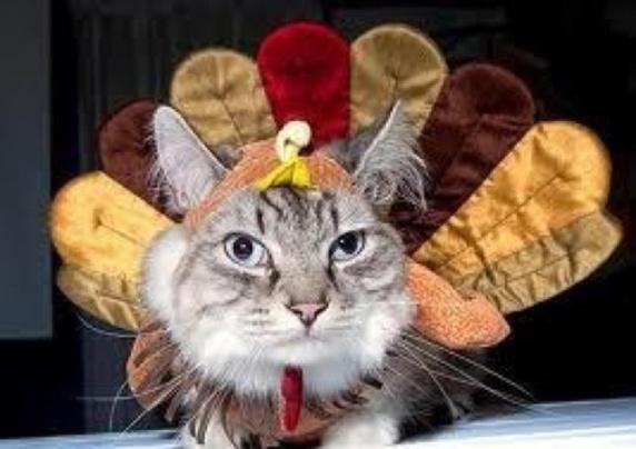 The Turkcat (Photo via Pinterest)