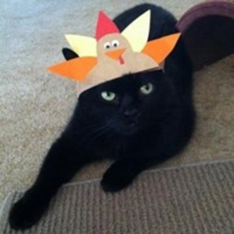 Angry Bird (Photo via Pinterest)
