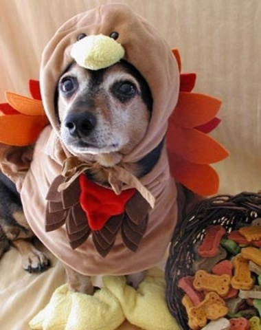 Bird of Shame (Photo via Pinterest)