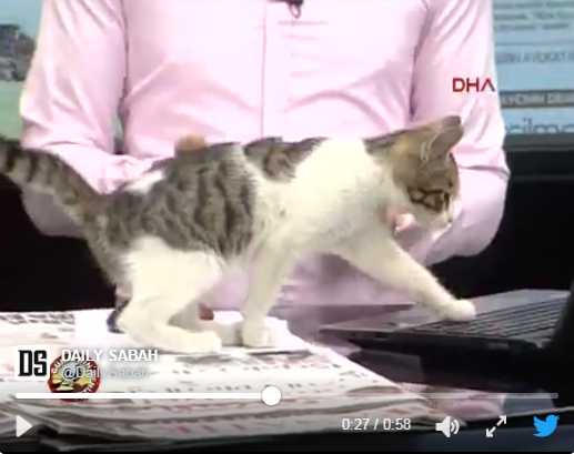 Stray Cat Surprises Turkish TV Show Host During Live Broadcast