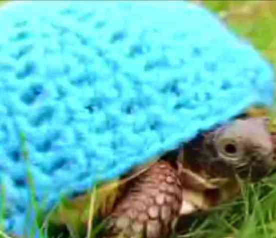 Is Your Reptile Cold Perhaps You Need A Turtle Cozy Petslady